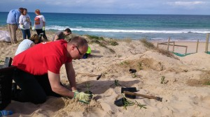 Planting at Wanda Beach